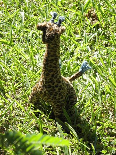 Giraffe by newsurfiegirl.
