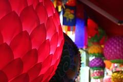 pink (Little Raven) Tags: holiday asia downtown buddhism seoul lantern southkorea jongno   buddhasbirthday lotuslanternfestival jongnogu