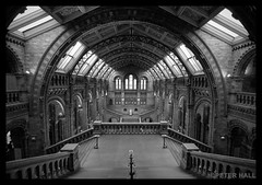Central Hall (peterphotographic) Tags: uk england blackandwhite building london museum architecture nikon tourist d200 naturalhistorymuseum centralhall blackwhitephotos