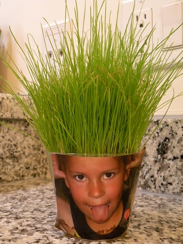 Cute use for Wheatgrass... plant wheatgrass in a cup, take a silly picture of your kid, print it out, tape it to the cup. Now it looks like crazy hair. www.houseofhepworths.com