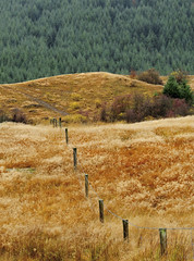 _DSC7146 (tye36) Tags: sunset newzealand snow reflection tree water sunrise sheep southisland otago toadstool maori kinloch glenorchy routeburn