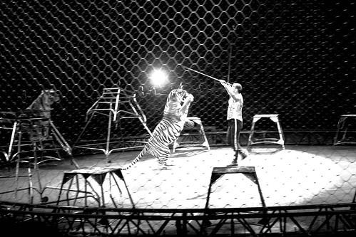 Circus-22