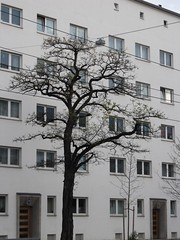 unnatural (koaxial) Tags: white house black tree window nature wall architecture canon munich mnchen fenster wand natur haus powershot architektur fractal opposites angular weiss baum schwarz eckig gegenstze branched 0124 sx130 verstelt koaxial 1010984 canonpowershotsx130is