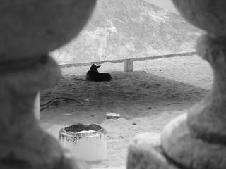 playas oscuras
