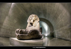 #319/365 Sphinx (iPh4n70M) Tags: people paris france statue sphinx museum photography photo nikon photographer photographie louvre walk perspective egypt muse fisheye photograph tc 365 nikkor sphynx bp 16mm hdr ballade egypte balade photographe parisienne parisien 9xp d700 9raw tcphotography baladesparisiennes ph4n70m iph4n70m tcphotographie