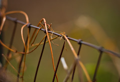 where there was once life and growth, is now dried and wasting away... (GarenT Photography) Tags: wire vines nikon garen d90 nikond90 garent fencefriday