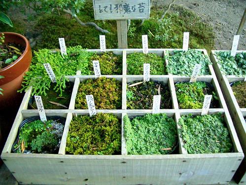 expo de mousses / japon 873046024_7dd141e1fe
