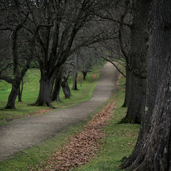 path among the trees (sue.h) Tags: trees grass leaves square path walk australia tasmania portarthur shopofcuriosities