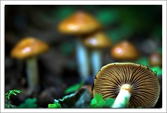 Harvest Time !! (Julien Robitaille Photographie) Tags: mushrooms bravo searchthebest charlevoix champignons stlawrenceriver harvesttime naturesfinest blueribbonwinner supershot flickrsbest abigfave diamondclassphotographer naturewatcher icecanoeracing julienrobitaille ilseauxcoudres