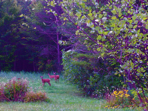 Backyard in early morning