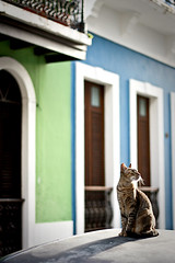 Los Gatos de San Juan (GirlsEyeView) Tags: cats island oldsanjuan puertorico gatos sanjuan kitties felines straycats girlseyeview bethanykohoutek