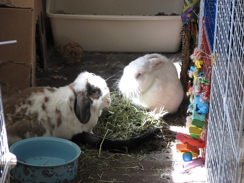 eating hay in the sun - 1