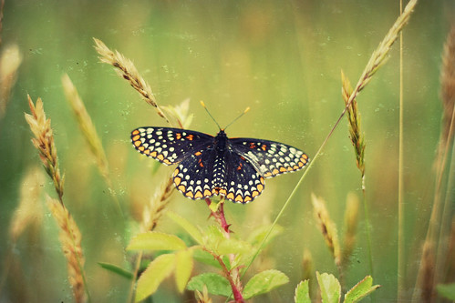 flutterby (by lucy.loomis)