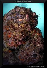 grignano's back side (Diego Poloniato) Tags: sea macro photography nikon mare underwater gulf d2x diving natura venezia trieste adriatic giulia friuli adriatico seasea fotosub