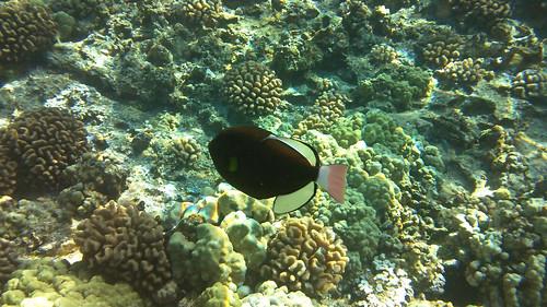 Molokini snorkel 6