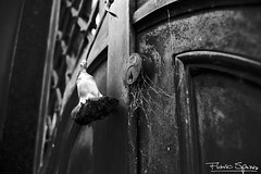 Rosa Negra (FlavioSpezia) Tags: door wood bw abandoned blancoynegro metal puerta madera nikon closed alone natural lock bn cerrado soledad carnation locked sober cerradura abandonado cerrojo abandonada d40 sobria