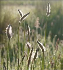 Grasses (yvonnepay615) Tags: uk sunlight nature lumix countryside bokeh norfolk panasonic g1 grasses 45mm eastanglia serenitynow itsawonderfulworld esenciadelanaturaleza