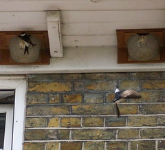 House Martens in Rotherhithe Village
