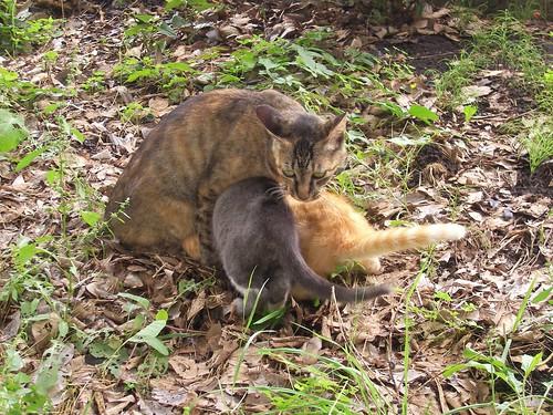 ニャー、ニャー。ネコだって子どもを守る。子どもを守らない人は、ネコ以下ってことよ
