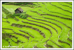 The Green Town - Ukhrul ( Manipur, India) (Arif Siddiqui) Tags: india landscapes places ilp tribes northeast arif arunachal kohima nagaland manipur tribals siddiqui jairampur diamondclassphotographer excapture ukhrul