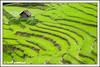 The Green Town - Ukhrul ( Manipur, India) (Arif Siddiqui) Tags: india landscapes places ilp tribes northeast arif arunachal kohima nagaland manipur tribals siddiqui jairampur diamondclassphotographer excapture ukhrul