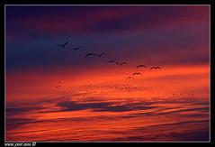 daybreak (xnir) Tags: trip morning travel sunrise canon eos dawn israel photo scenery best explore 10d usm  ef daybreak deniro nir  70200mm  benyosef f28l anawesomeshot wwwxnircom xnir ysplix hachoolalake  photoxnirgmailcom