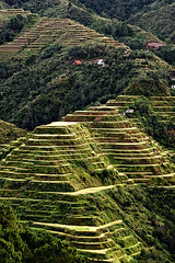 (Ian Ong) Tags: world travel wonder rice philippines terraces banaue 8th ifugao luzon