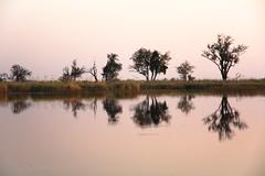 20090902 Okavango - Moremi 202 (blogmulo) Tags: africa travel canon landscape wildlife reserve delta paisaje viajes botswana moremi 2009 f28 okavango canon70200 canon450d blogmulo