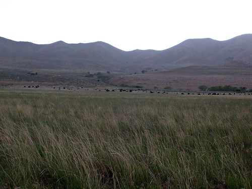 Antelope Island 028