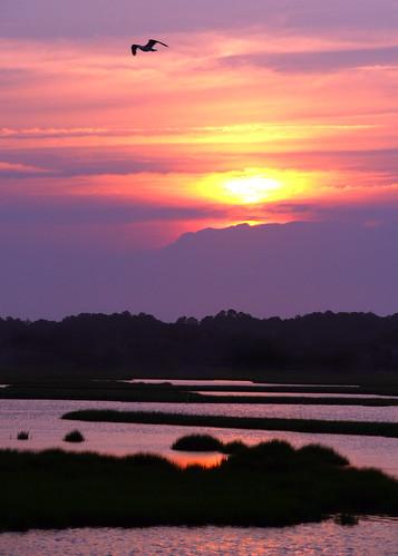 seagull over sunset