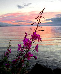 sunset and flowers