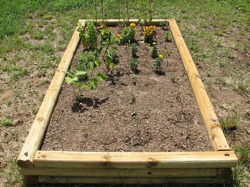 Raised Vegetable Garden - Back View