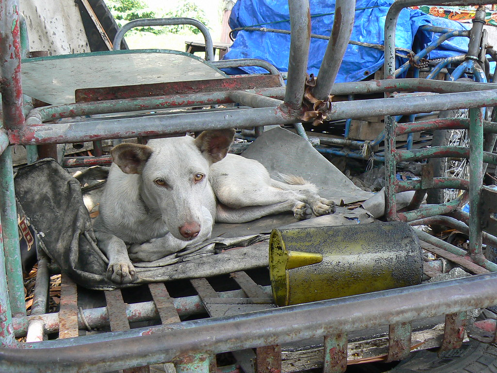 Dog_Vulcanizing Shop by Constantine Agustin, on Flickr