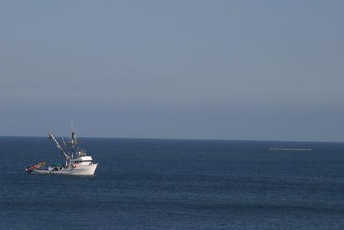 trawler and shark tank