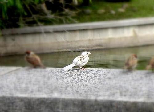 無限台南-白子麻雀-1