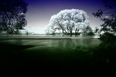 The big white tree (photon tamer) Tags: longexposure morning light sunset sea summer sun sunlight seascape tree beach nature water river germany landscape bavaria dawn coast interestingness soft exposure riverside availablelight sony smooth noflash explore infrared coastline alpha 700 frontpage explored tamronaf1750mmf28xrdiiildasphericalif sonydslra700 fpexplore