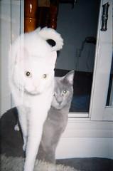 Double Kitty (iugmoura) Tags: camera cats pets film home 35mm exposure kodak double 400 disposable