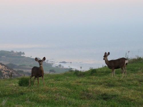 deer 006