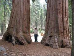 Me between two big-ass trees