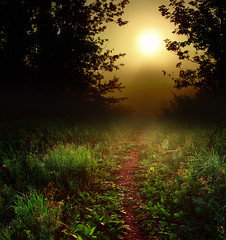 Into the sun (James Jordan) Tags: sun fog wow woods bravo peace artistic path expression dream journey destiny soe jelke fivestarsgallery abigfave impressedbeauty superaplus aplusphoto isawyoufirst superbmasterpiece superhearts potwkkc44 excapture winnerbc