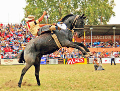 "Bien ""acomodao"" (Eduardo Amorim) Tags: horses horse southamerica caballo uruguay cheval caballos bravo cavalos prado montevideo pferde coolest cavalli cavallo cavalo gauchos pferd hest hevonen chevaux gaucho  amricadosul montevidu hst uruguai gacho  amriquedusud  gachos  sudamrica suramrica amricadelsur  sdamerika jineteada supershot   americadelsud gineteada anawesomeshot impressedbeauty  americameridionale holidaysvancanzeurlaub semanacriolla semanacriolladelprado eduardoamorim"