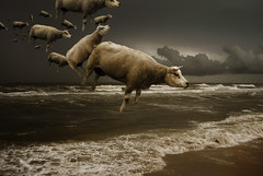 Sheep have to learn to fly...  Al Gore (opdrie) Tags: sea seascape holland beach nature water netherlands dutch topv111 dark landscape nederland surreal tempest naturesfinest 7707 impressedbeauty opdrie
