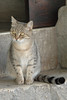 Il micio tutt'occhi (joeanty) Tags: italy cat bigeyes nikon italia gatto umbria gubbio joeanty mcb1419 gianlucaantonelli