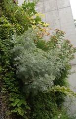 growing picture back 2007-06 (Brigitte Rieser) Tags: vienna wien park public garden patrick blanc garten ffentlich growingpicture weidlfein