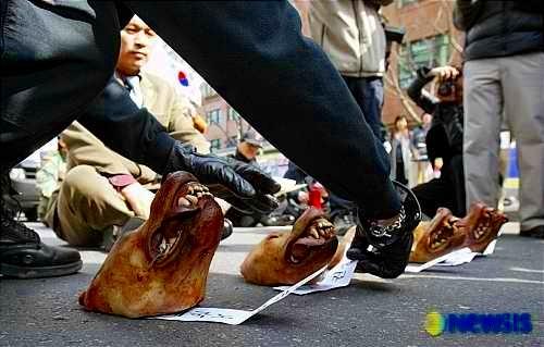 korean-dogheads4.jpg