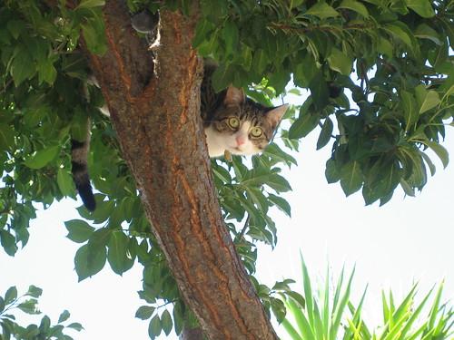 Tazendra up a tree