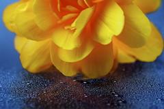 Flower 4 - by 96dpi