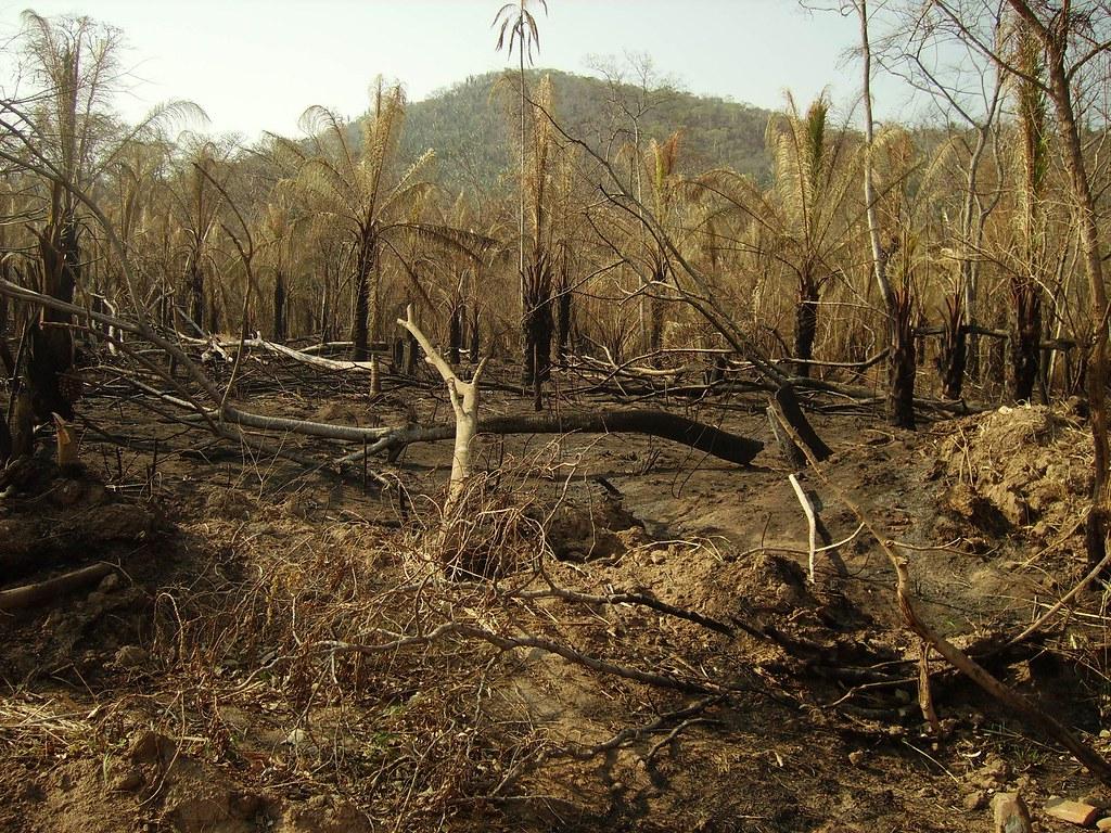 Resultado de imagen para incendio en guarayos