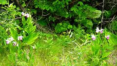 Cedar Bog, Urbana, OH 2007 3946Ri 9x16 (edgarandron - Busy!) Tags: ohio wetlands urbana bog fen cedarbog