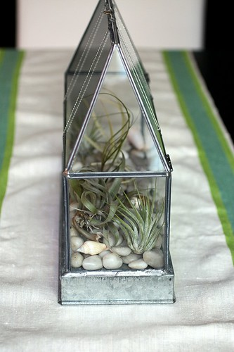 dining table terrarium